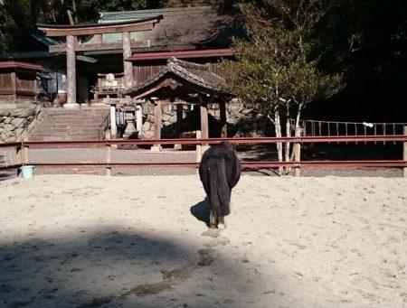 03.丹生川上神社下社の馬2