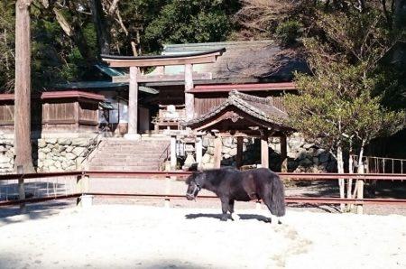 04.丹生川上神社下社の馬3