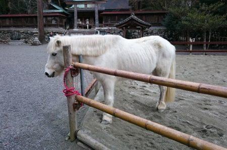06.白い神馬