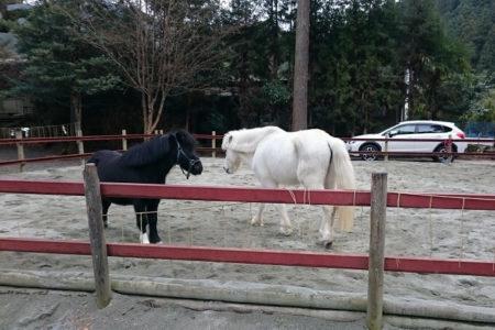 07.白と黒の新馬が一緒に