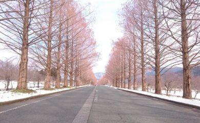09.メタセコイヤ並木 裸樹2