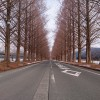 膨大な自然が残る滋賀県マキノ町!冬のメタセコイア並木!!