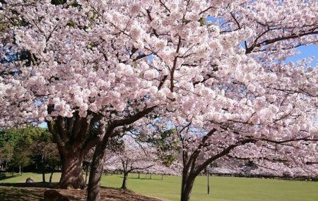 01.奈良公園