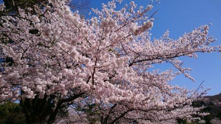 02.奈良公園3