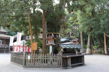 11.巳の神杉