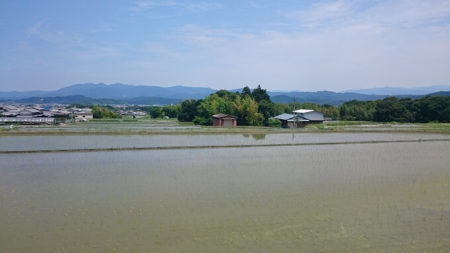 06.田んぼの写真
