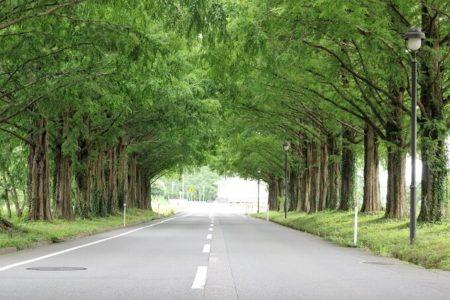 07.並木道のトンネルの写真