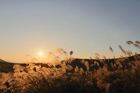07.黄金に輝くススキの写真