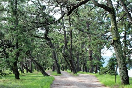 10.松林の写真