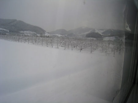 02.雪の中のリンゴの木の写真