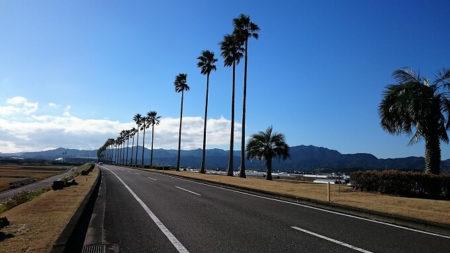 02.南国ムードな道の写真