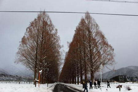 09.メタセコイア並木 裸樹正面の写真