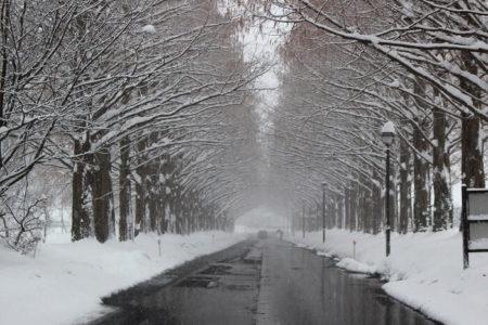 14.雪化粧のメタセコイア並木の写真5