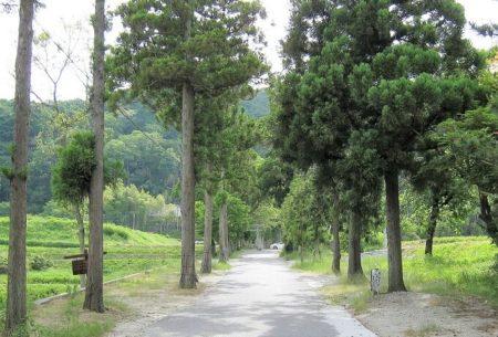04.一言さんへと続く杉並木の写真