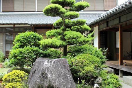 06.松の木が立派だという写真