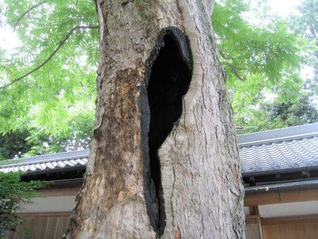 09.木の空洞の写真