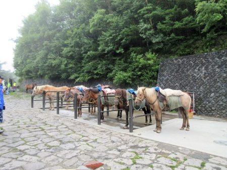 09.吉田ルートの馬の写真