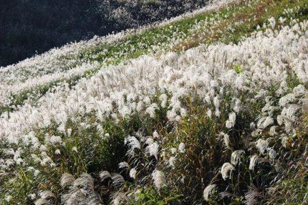 07.船上山のススキ野原の写真