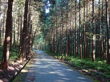 11.林道の写真