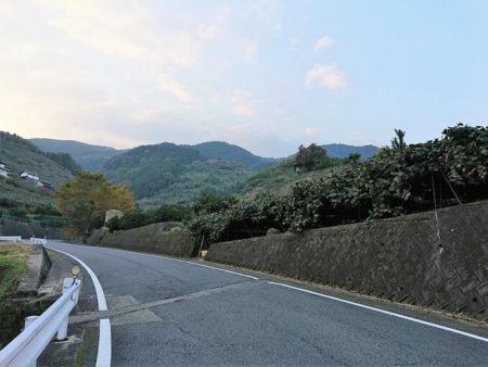 01.道沿いに栽培されているフルーツの写真