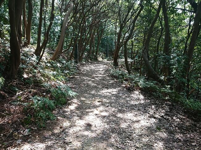 16.ジャングルの写真