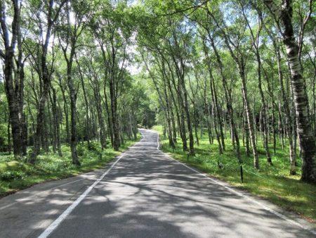 17.県道464号線 白樺並木とCBRの写真(3)