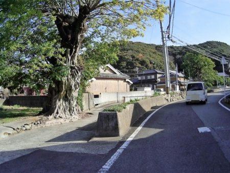 面白い木の写真
