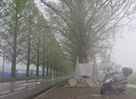 雨のメタセコイア並木でGTRの写真