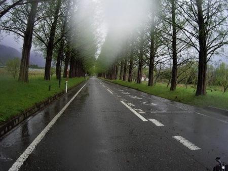 雨のメタセコイア並木の写真