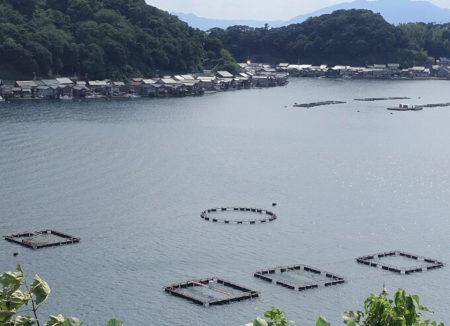 伊根湾で養殖されているされている魚や牡蠣のイカダの写真